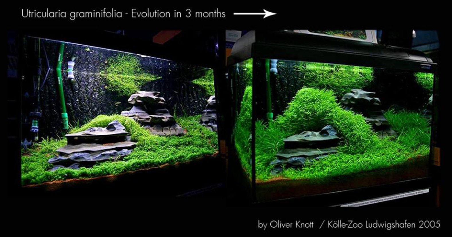 Oliver Knott Aquascaping 28 Images Oliver Knott