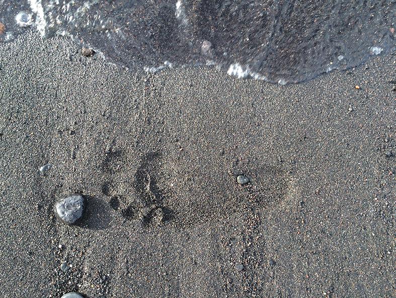 spurn im sand